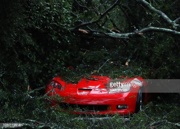 Corvette sits damaged after a large tree fell on it on September 16 2018 in Wilmington North Carolina Hurricane Florence hit Wilmington as a category...
