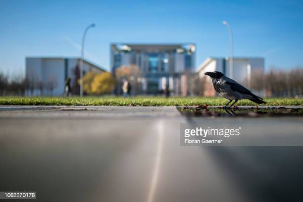 A corvus is pictured in front of the Federal Chancellery on November 16 2018 in Berlin Germany