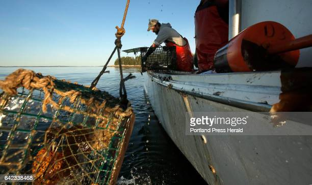 Cory McDonald pulls lobster out of a trap while fishing off the coast of Stonington on September 5 2015 Over the past two decades the lobster...