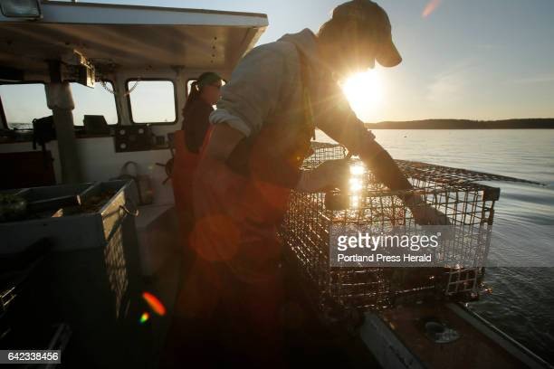 Cory McDonald removes a bait bag from a lobster trap while fishing off the coast of Stonington on September 5 2015 Over the past two decades the...