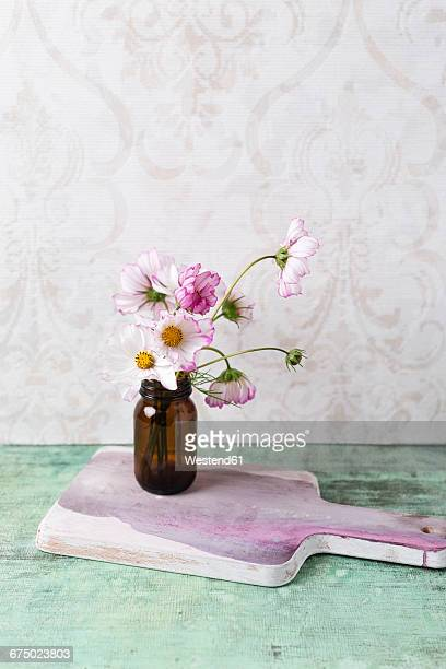 Cosmea, Cosmos bipinnatus, in a glass on chopping board