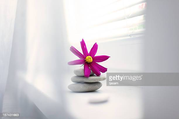Cosmos By The Window