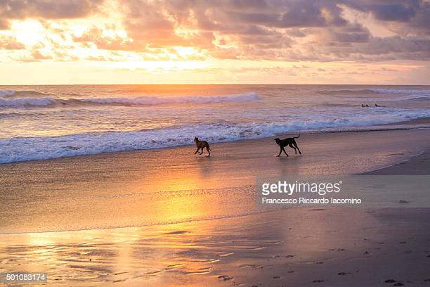 Costa Rica, dogs playing on the shore