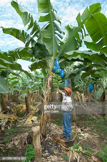 Costa Rica, man working on banana farm in Puerto Viejo