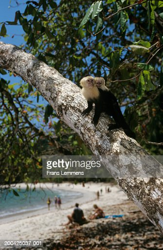 Monkey In Tree With Young Tourists