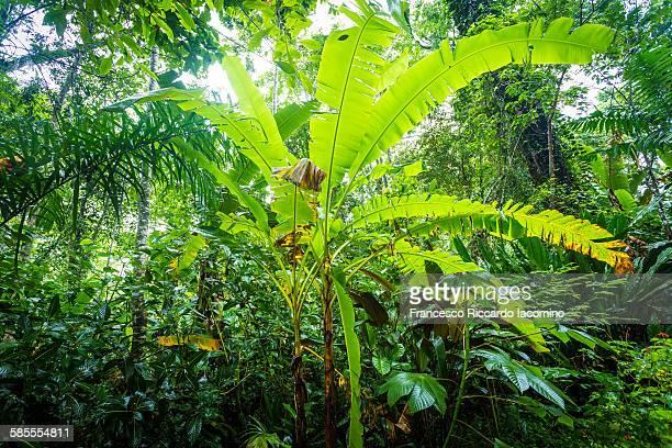 costa rica rainforest - iacomino costa rica foto e immagini stock