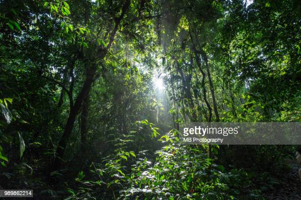costa rica rainforest - corcovado stock pictures, royalty-free photos & images
