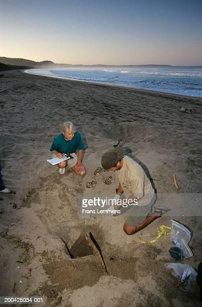costa rica, tamarindo,  playa grande, biologists checking turtle eggs - playa tamarindo fotografías e imágenes de stock