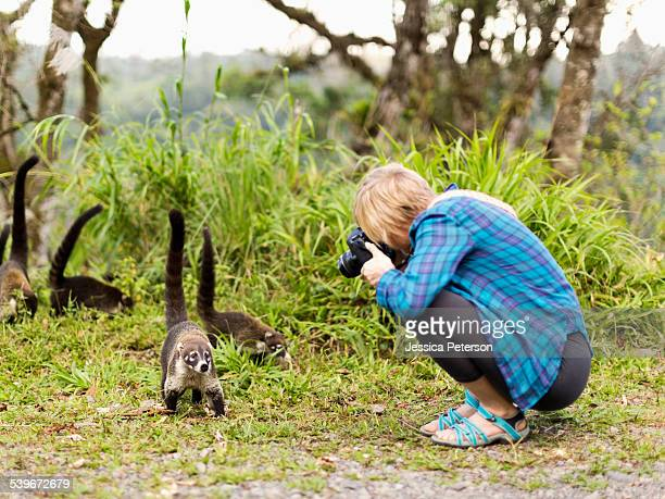 Costa Rica, Woman taking photos of coatis living in the wild
