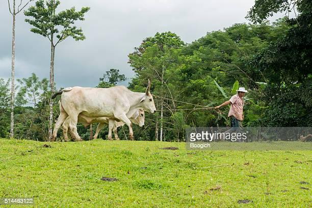 costa-ricanische landwirt in der weide mit rinder auf guanacaste bauernhof - guanacaste stock-fotos und bilder