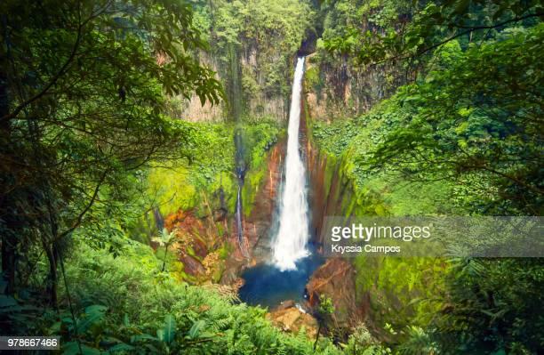 costa rican jungle - costa rica stock-fotos und bilder