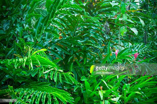 Costa Rican rain forest covered in dense vegetation