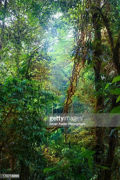 Costa Rican Rain-forest