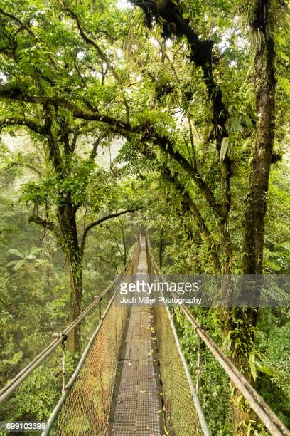 Costa Rican Sky Bridge