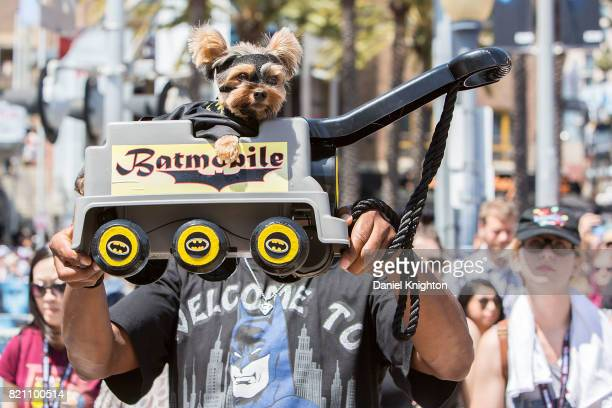 A costumed dog attends Day 3 of ComicCon International on July 22 2017 in San Diego California