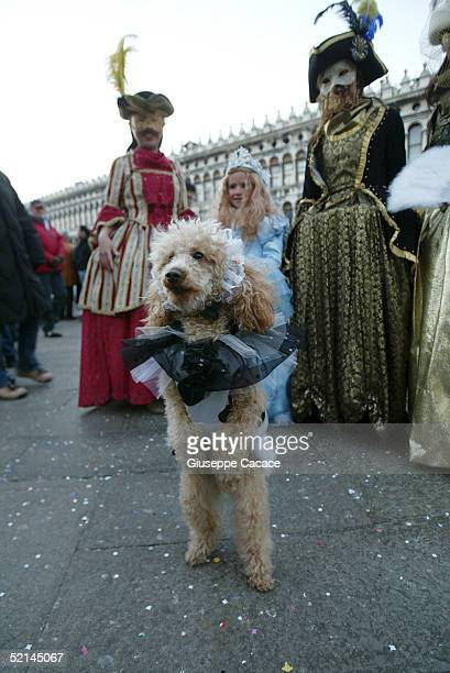 Costumed dog is seen at the 2005 Venice Carnival on February 5, 2005 in Venice, Italy.
