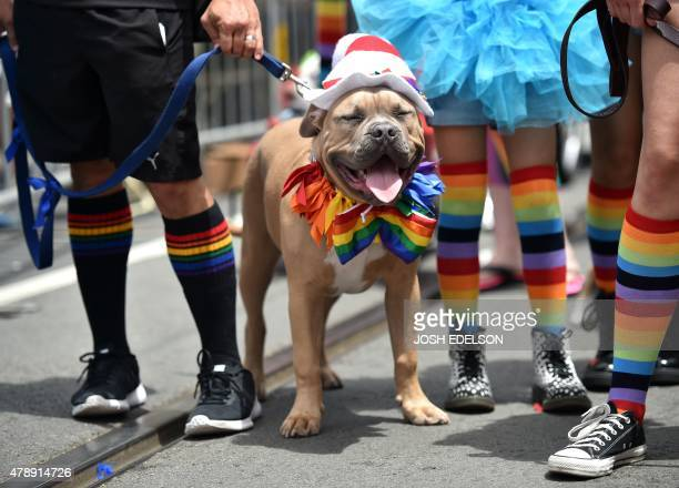 A costumed dog stands along Market Street during the annual Gay Pride Parade in San Francisco California on June 28 California on June 28 two days...