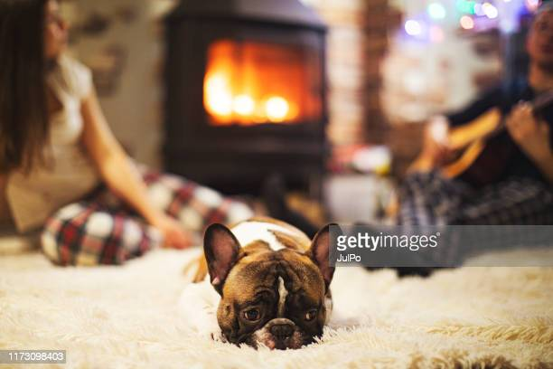 cosy winter holidays - cozy stock pictures, royalty-free photos & images
