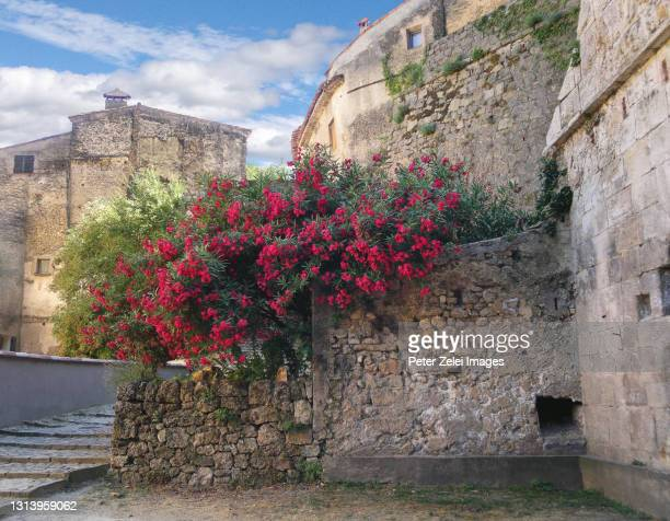 cotignac, old town in provence, france - var stock pictures, royalty-free photos & images