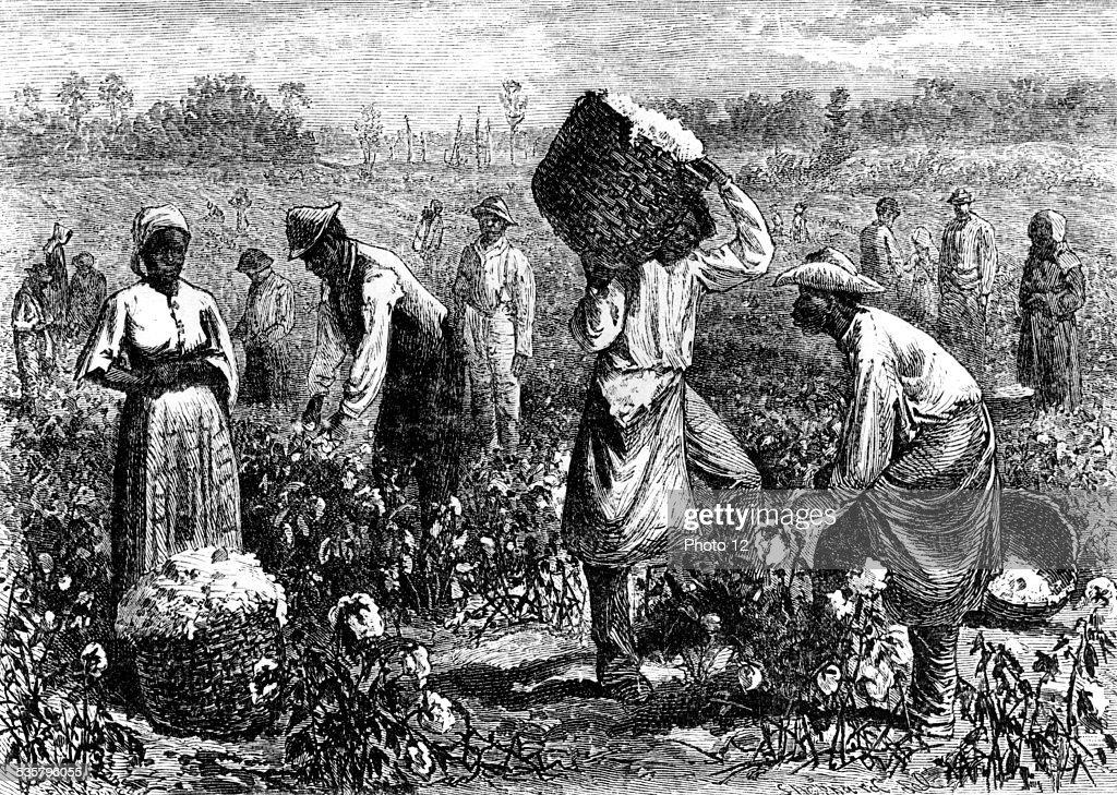 A coton plantation : News Photo