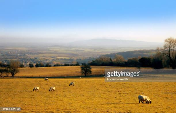 cotswold soil farmland autumn earth landscape agriculture scenic - shot on film - agriculture stock pictures, royalty-free photos & images