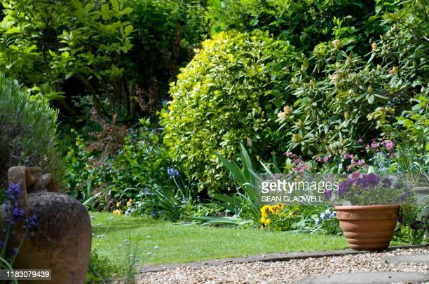 cottage garden - 庭園 ストックフォトと画像
