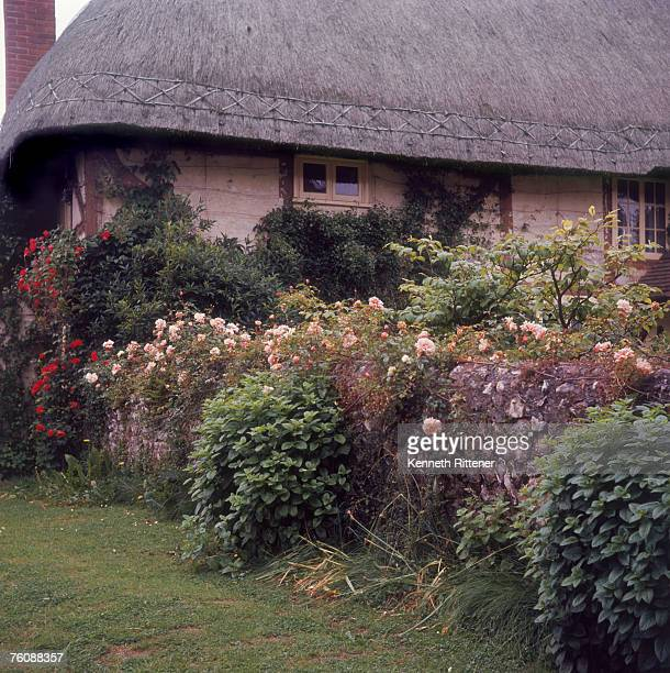 A cottage garden with roses Chilbolton Hampshire 26th June 1964