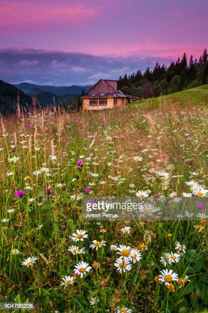 cottage in the mountains at sunset - anton petrus stock pictures, royalty-free photos & images