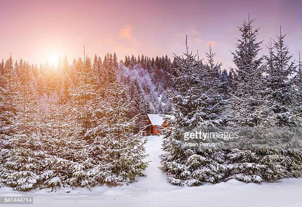 Cottage in the snowy forest