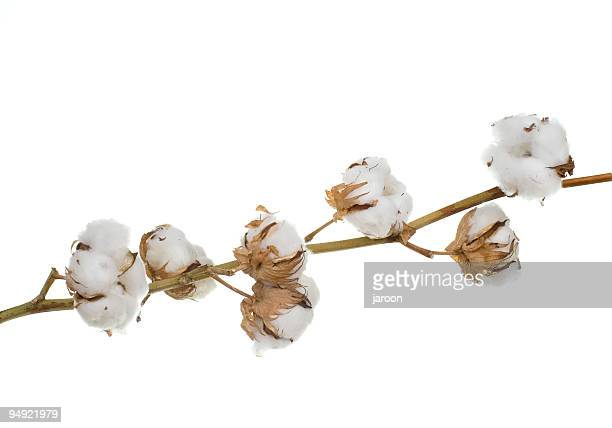 cotton 100% - cotton stock pictures, royalty-free photos & images