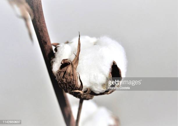 cotton bale on light background - cotton stock pictures, royalty-free photos & images