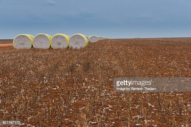 Cotton Bales on the fields