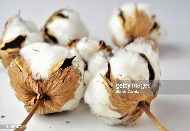 cotton balls on white background - organic stock pictures, royalty-free photos & images