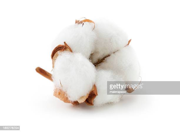 cotton boll - cotton stock pictures, royalty-free photos & images
