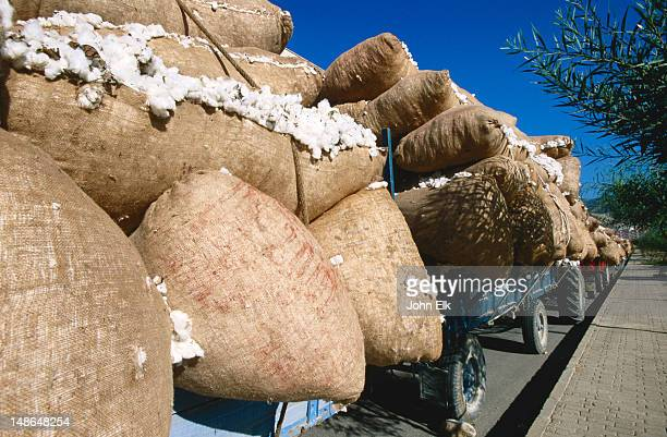 cotton crop being transported to mill. - bergama stock pictures, royalty-free photos & images