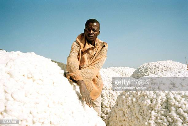 A cotton farmer from Gorra village in southern Chad where an Exxon Mobil pipeline will carry oil from the landlocked oil fields of Chad through the...