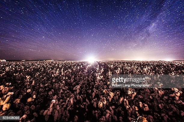 Cotton harvesting at night, Australia