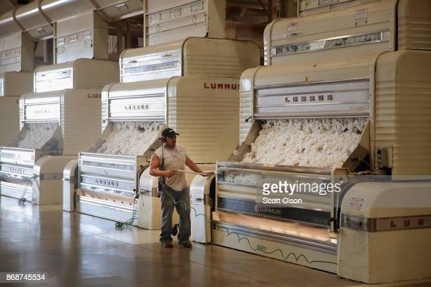 Cotton is cleaned of seeds and plant waste dried and compressed into bales at Wilson Gin on October 30 2017 near Wilson Arkansas Despite extensive...