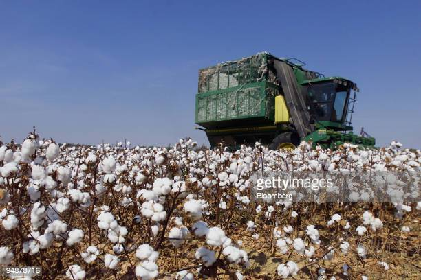 Cotton is harvested on part of the 900 acres of The Harold and Tommy Hancock Farms located in Madison and Yazoo Counties Mississippi October 5 2004