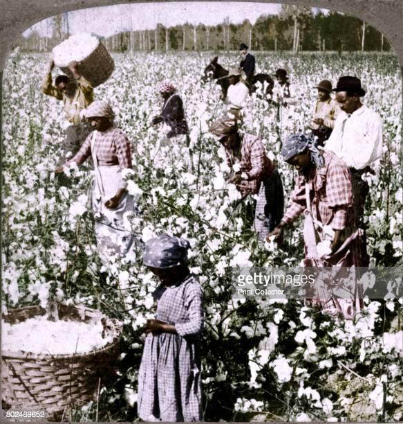 Cotton is king plantation scene with pickers at work Georgia' c1900 [Underwood Underwood New York London TorontoCanada OttawaKansas 1900] Artist...