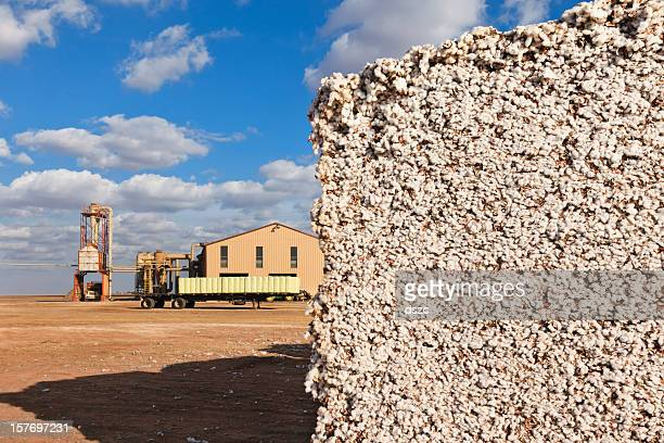 cotton module in gin yard ready for ginning - cotton gin stock photos and pictures