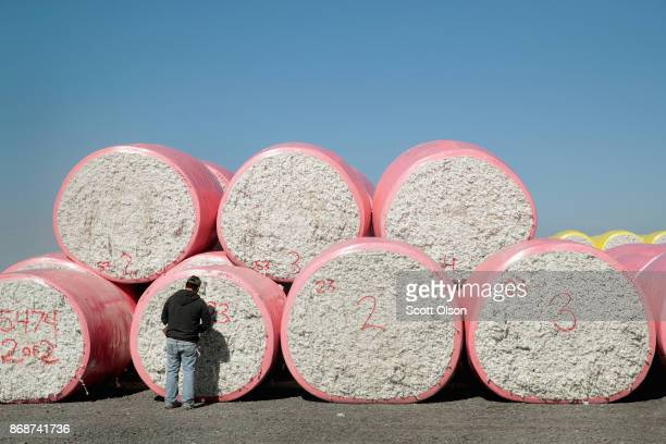 Cotton modules arrive for processing at Wilson Gin on October 30 2017 near Wilson Arkansas Despite extensive damage to the nation's cotton crop from...