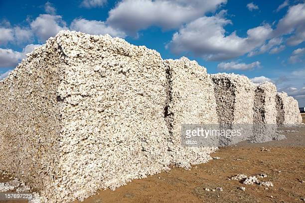 cotton modules in gin yard ready for ginning - cotton gin stock photos and pictures