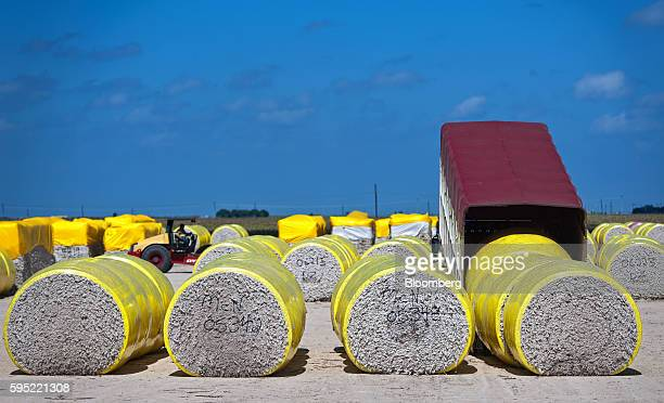 Cotton modules sit before processing at the Gulf Coast Cooperative gin in the Nueces County of Bishop Texas US on Wednesday Aug 24 2016 The United...