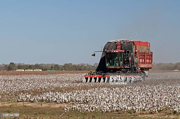 cotton picker harvesting in cotton field, southeastern missouri, usa - cotton harvest stock pictures, royalty-free photos & images
