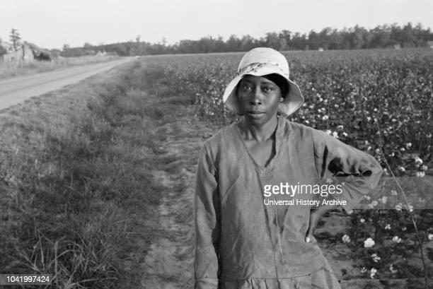 Cotton Picker Pulaski County Arkansas USA Ben Shahn for US Resettlement Administration October 1935