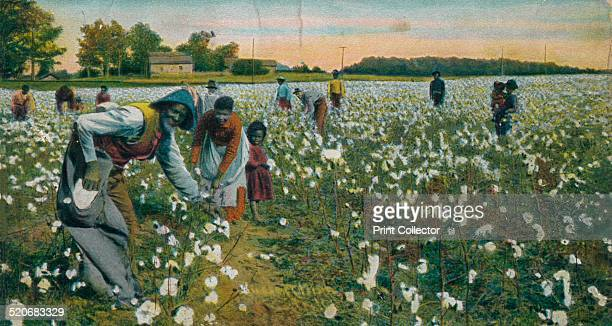 Cotton Picking Augusta Georgia c1900 Cultivation of cotton using slaves brought huge profits to the owners of large plantations making them some of...