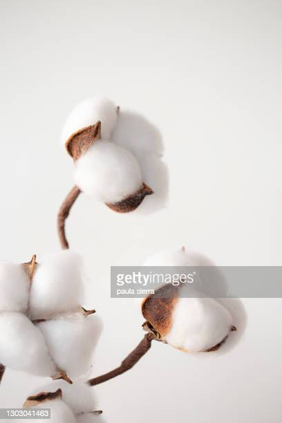 cotton - 木綿 ストックフォトと画像