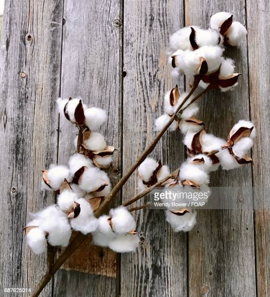 Cotton plant on wood