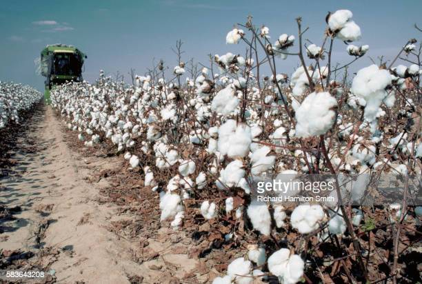 3,041 Cotton Farm Photos and Premium High Res Pictures - Getty Images